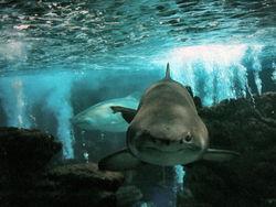 Bússola Escolar Animais Tubarão